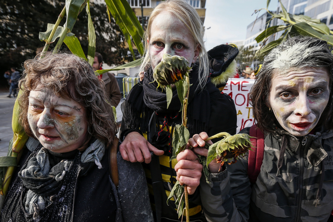 epa03907292 Belgian activists protest against the US chemical corporation Monsanto and their role in making Genetically Modified Organisms (GMOs) in Brussels, Belgium, 12 October 2013. Belgian anti-GMO activists joined a global protest against Monsanto who make GMOs as well as many toxic chemicals including pesticides, plastics and artificial food additives.  EPA/THIERRY ROGE