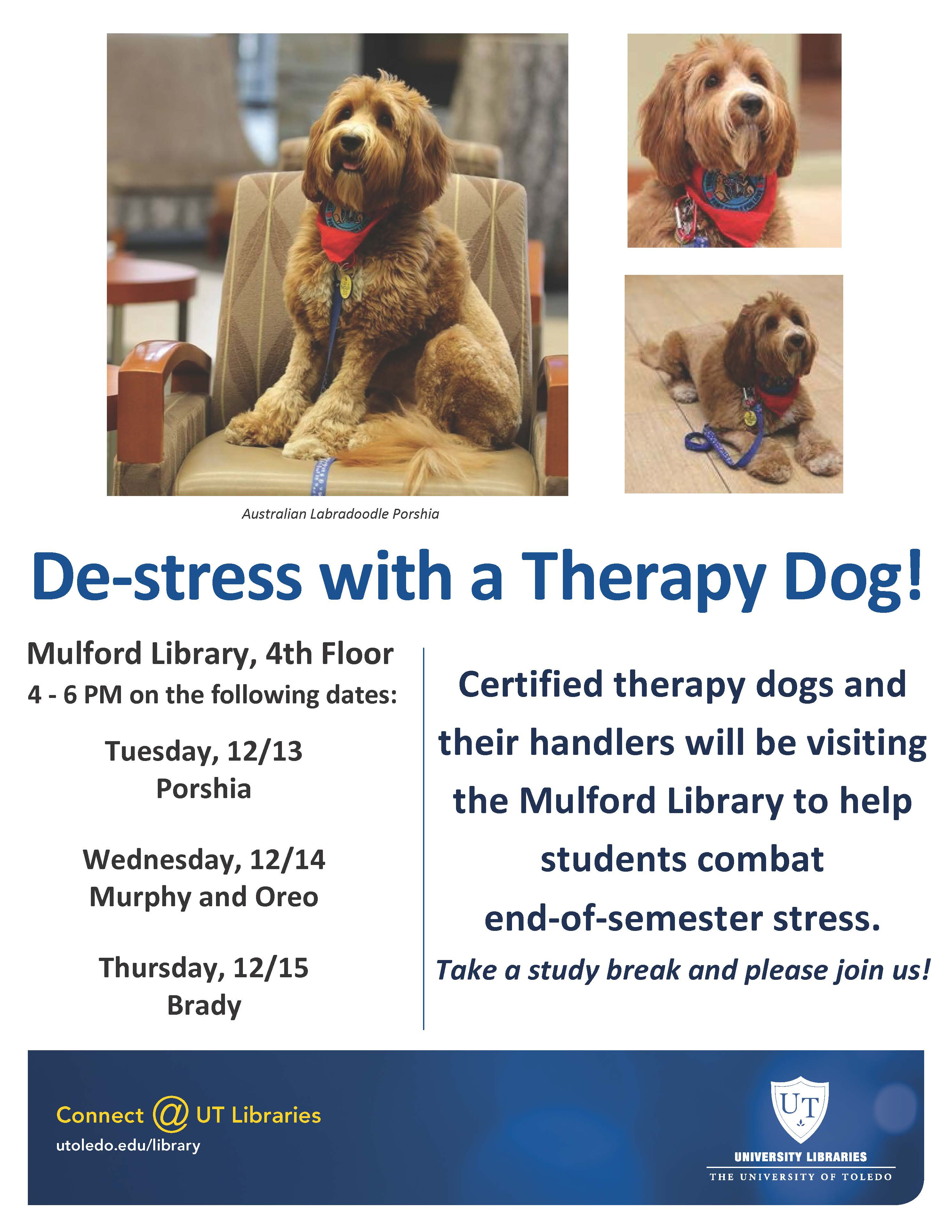 therapy-dogs-at-mulford